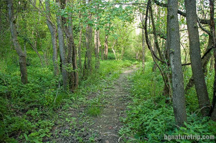 Горска пътека около устието на Велека