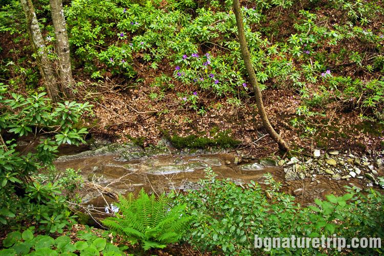 Река Марина, чиито брегове са отрупани с рядкото растение