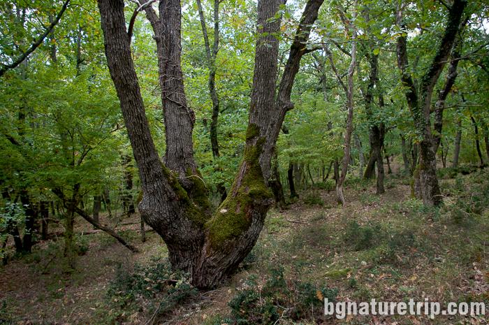 Изглед встрани към гъстата широколистна гора на резерват Ропотамо