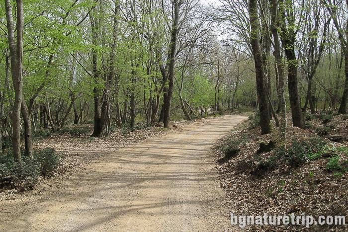 Черният път минаващ през гората - подходящ както за автомобил, така и за пешеходна разходка