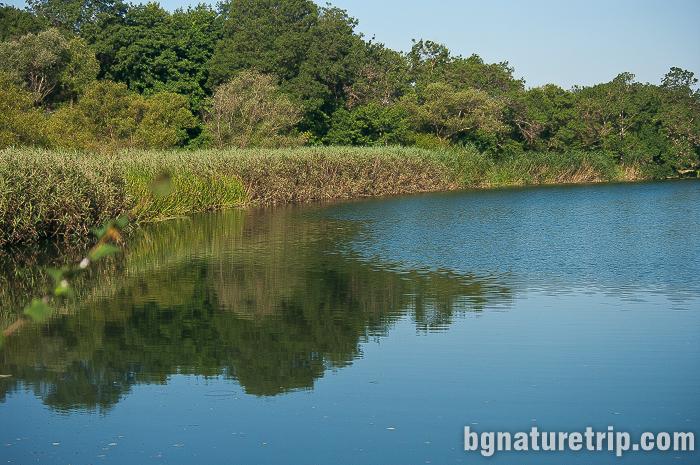 Богатите на растителност брегове на река Велека, Синеморец