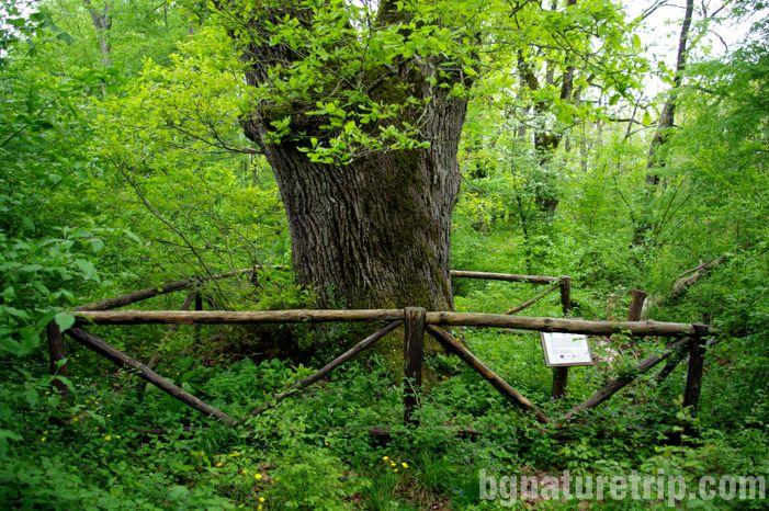 еко-пътека-маршрут-пешеходен-Граматиково-Странджа-лъжник