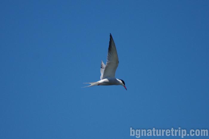 Речна-рибарка-поморийско-езеро-Поморие-център-посетителски-птицинаблюдение