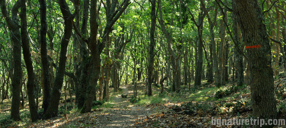 Екопътеката през гората водеща към Маслен нос