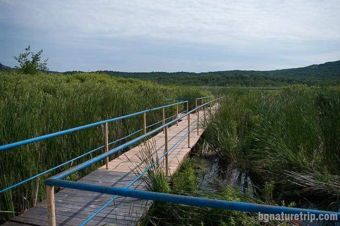 Дървен мост през блатото Аркутино