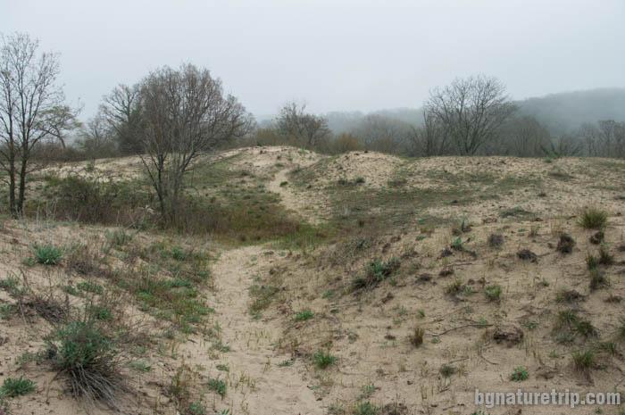 Пясъчните дюни преди устието на р. Ропотамо
