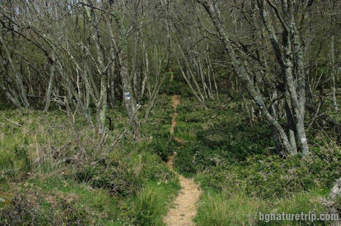 """Тясна пътечка през храстите """"Бодлив залист"""""""