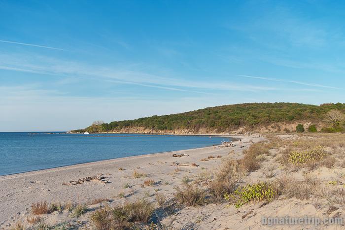 Пясъчната ивица и дюните преди устието на река Ропотамо