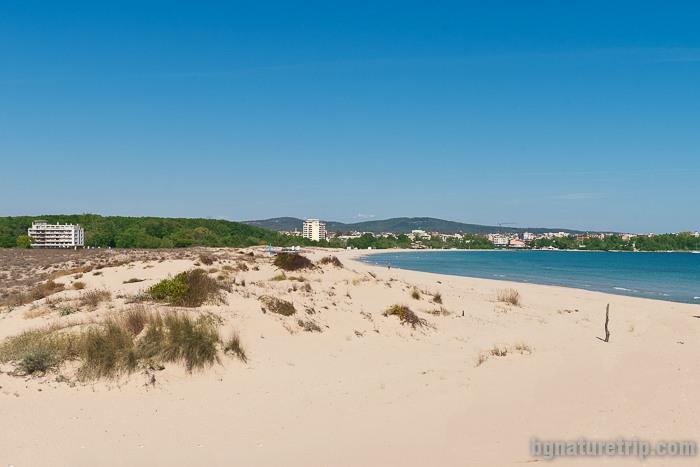 Зад Южен плаж Приморско също има пясъчни дюни с редки пясъчни растения