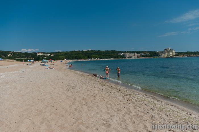 """Дивият плаж до селище """"Дюни"""""""
