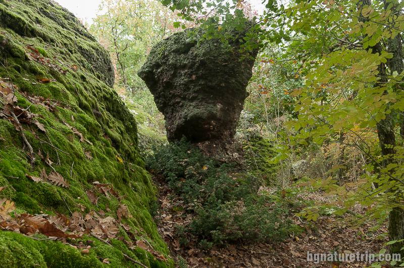 Една от най-високите скални гъби
