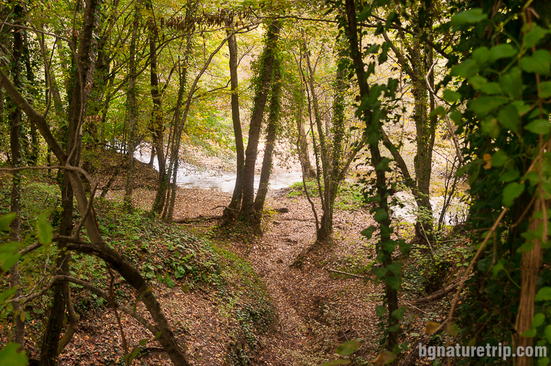 Изглед към река Велека, която е трудно да бъде видяна измежду многото клони на дърветата