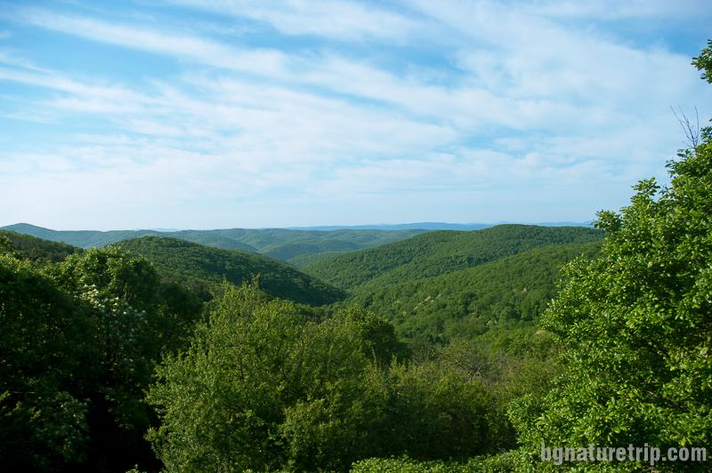 Панорамна гледка от връх Дядо Вълчо към хълмовете наоколо.