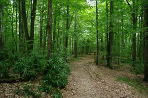 Природен-парк-Странджа-забележителности-маршрути