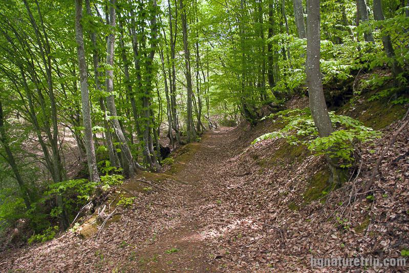 По пътеката към Двата вриса, село Бръшлян, Странджа