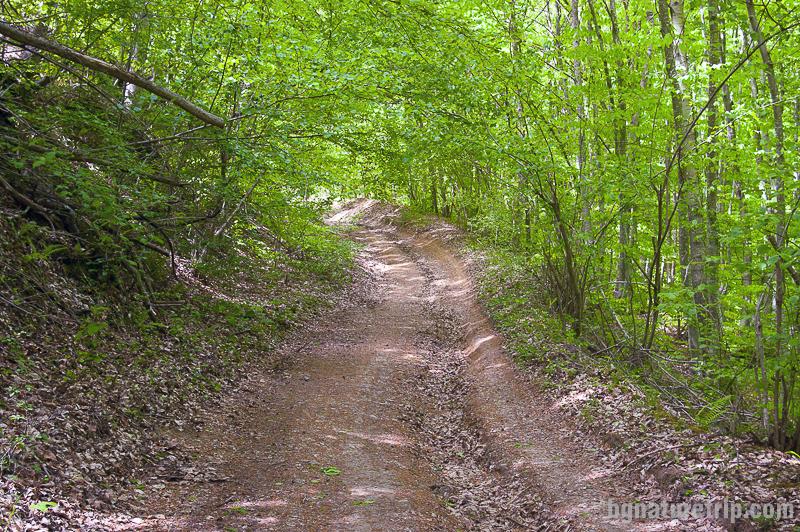 Пътят към Св. Пантелеймон до село Бръшлян