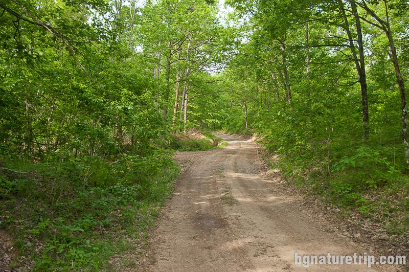 Черният път по периферията на резерват Силкосия водещ към Дядо Вълчо