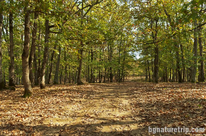 Кратък участък преминаващ през гора