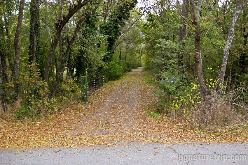 Разходка през гората на Парк Росенец