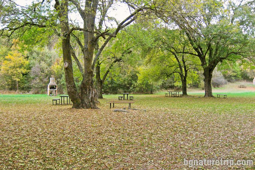 Вековни дървета на поляната на Парк Росенец