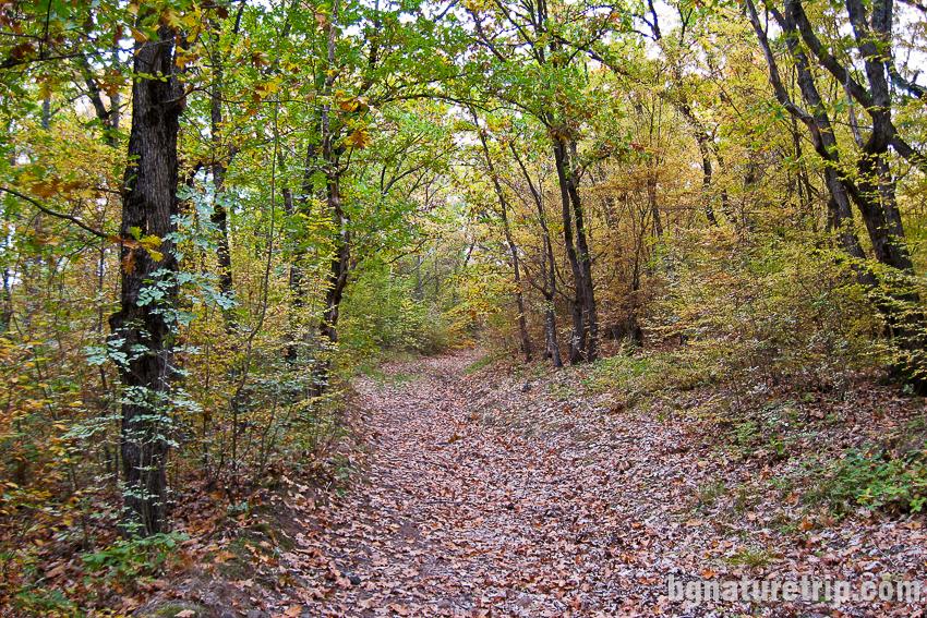 Разходка през гората на Парк Росенец ( Отманли )